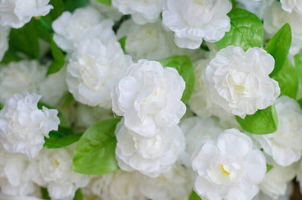 Hình Ảnh Hoa Nhài Đẹp 7