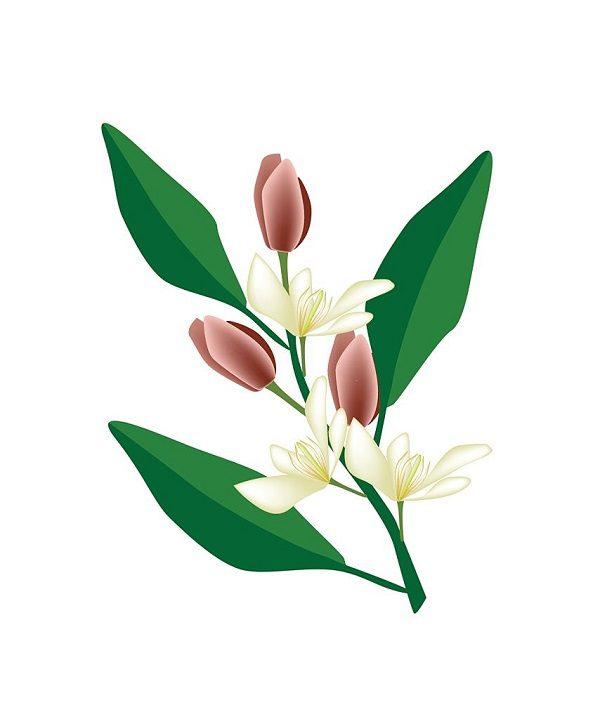 Hình Ảnh Hoa Ngọc Lan Đẹp 10