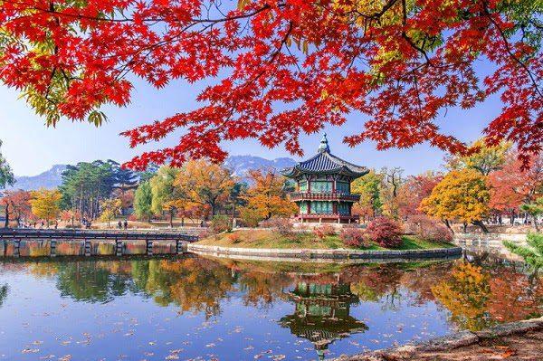 Hình Ảnh Mùa Thu Hàn Quốc Đẹp 2