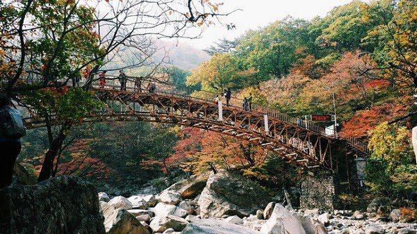 Hình Ảnh Mùa Thu Hàn Quốc Đẹp 3