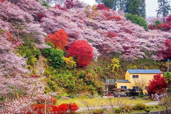 Hình Ảnh Mùa Thu Đẹp Nhật Bản 3