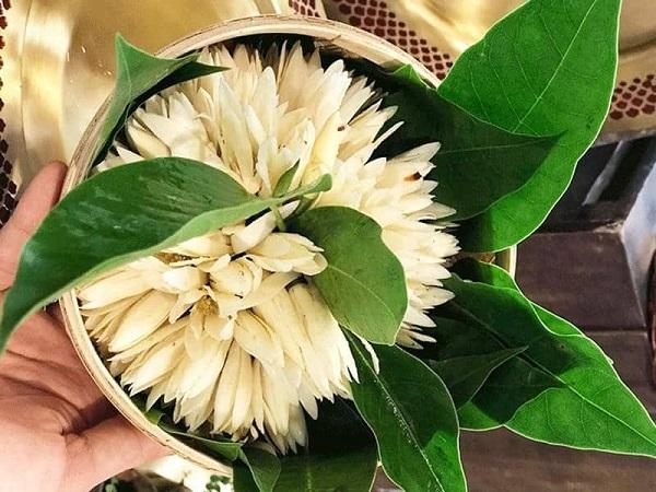 Hoa Ngọc Lan Lâm Thuốc