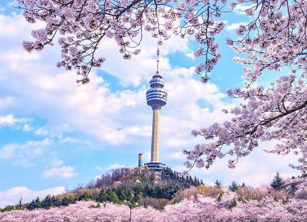 Cảnh Đẹp Mùa Xuân Hàn Quốc