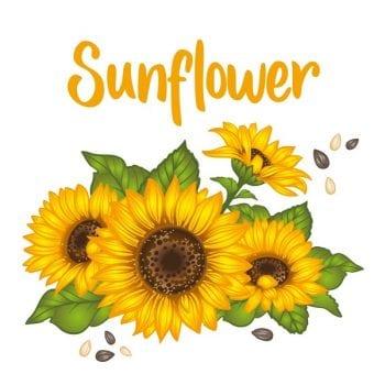 Hoa hướng dương- Hoa Mặt Trời