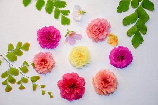 Hoa mười giờ nhiều sắc màu