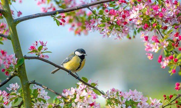 Mùa Xuân Bắt Đầu Từ Tháng Mấy