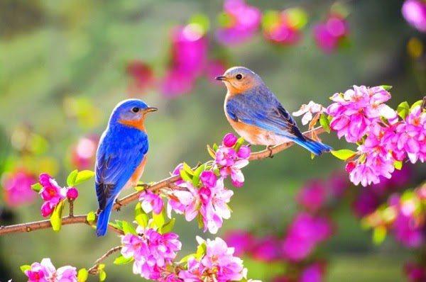 Ý Nghĩa Mùa Xuân Với Động Vật