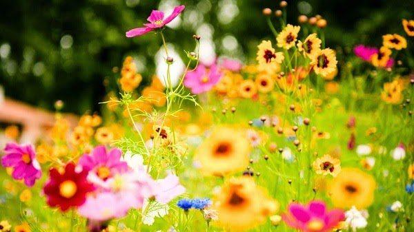Ý Nghĩa Mùa Xuân Với Thực Vật