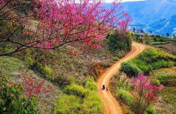 Vào Mùa Xuân, Cỏ Cây Hoa Lá Đâm Chồi