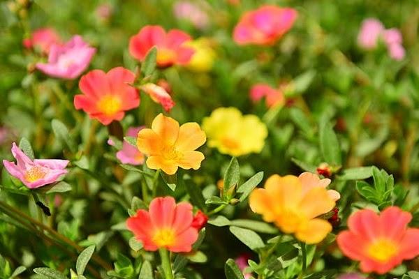 Trang Trí Cảnh Quan, Sân Vườn