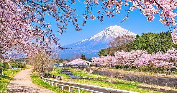Nhật Bản Mùa Hoa Anh Đào 6