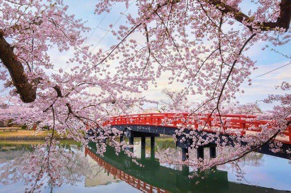Nhật Bản Mùa Hoa Anh Đào 5