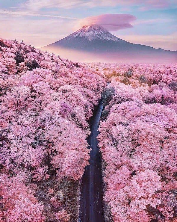 Nhật Bản Mùa Hoa Anh Đào 3