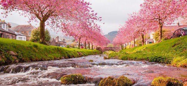 Nhật Bản Mùa Hoa Anh Đào 2