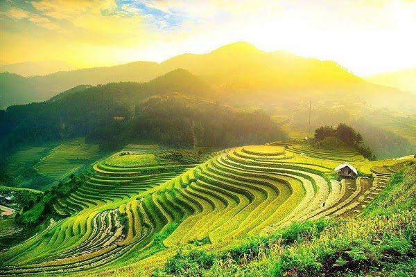 Ruộng Bậc Thang Sapa Mùa Hè