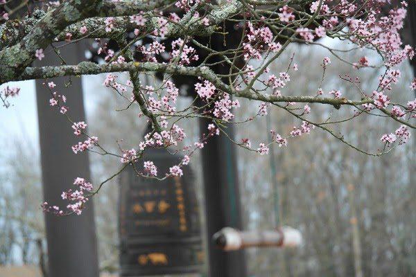 Thời Tiết Mùa Xuân
