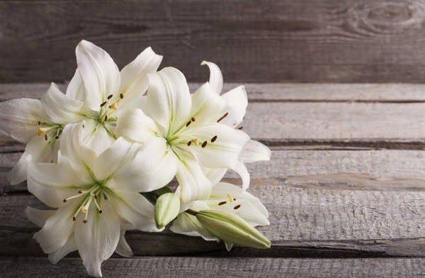 Hình Ảnh Hoa Ly Đẹp 6