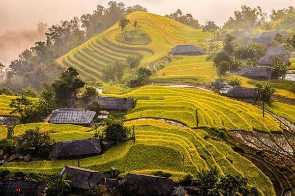 Cảnh Đẹp Hà Giang Ruộng Bậc Thang Hoàng Su Phì