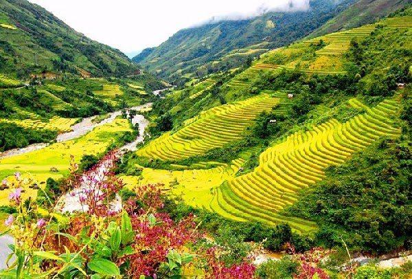 Cảnh Đẹp Sapa Thung Lũng Mường Hoa
