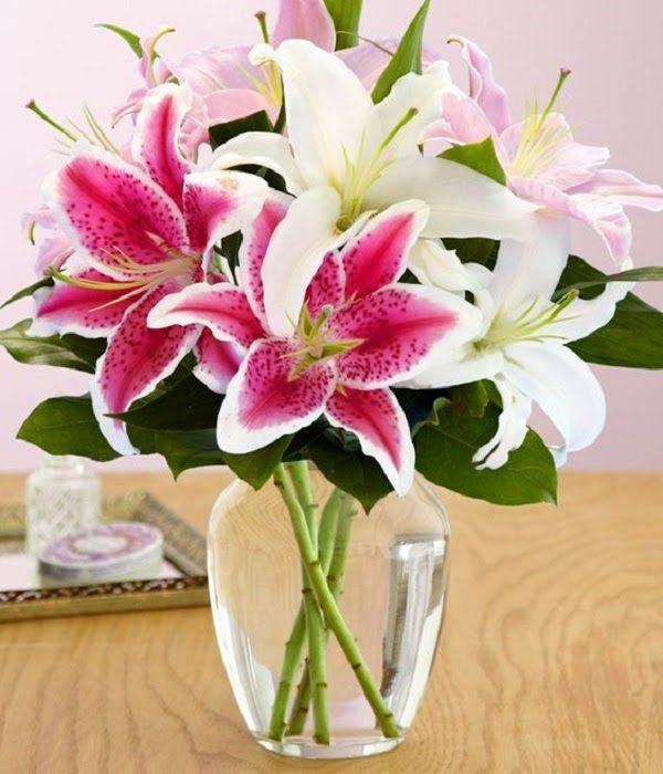 Hình Ảnh Hoa Ly Đẹp 10
