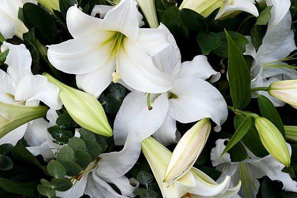 Hình Ảnh Hoa Ly Đẹp 4