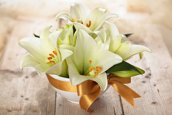 Hình Ảnh Hoa Ly Đẹp 8