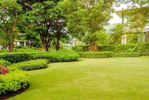 Sân Vườn Đẹp Với Cây Xanh 1