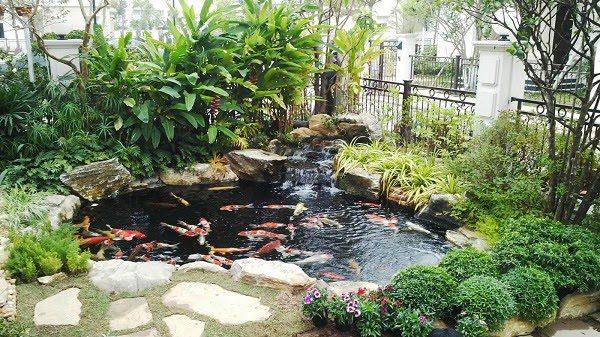 Sân Vườn Với Bể Cá 10