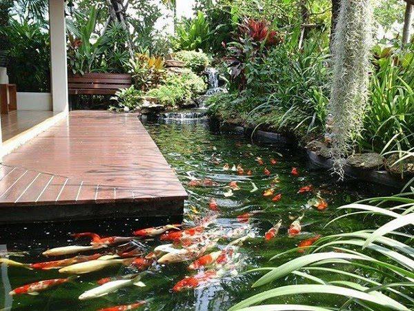 Sân Vườn Với Bể Cá 7
