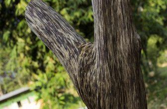 Review gỗ trầm hương