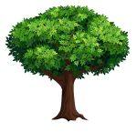 Cây nguyên liệu là cây gì? Những loại phổ biến hiện nay